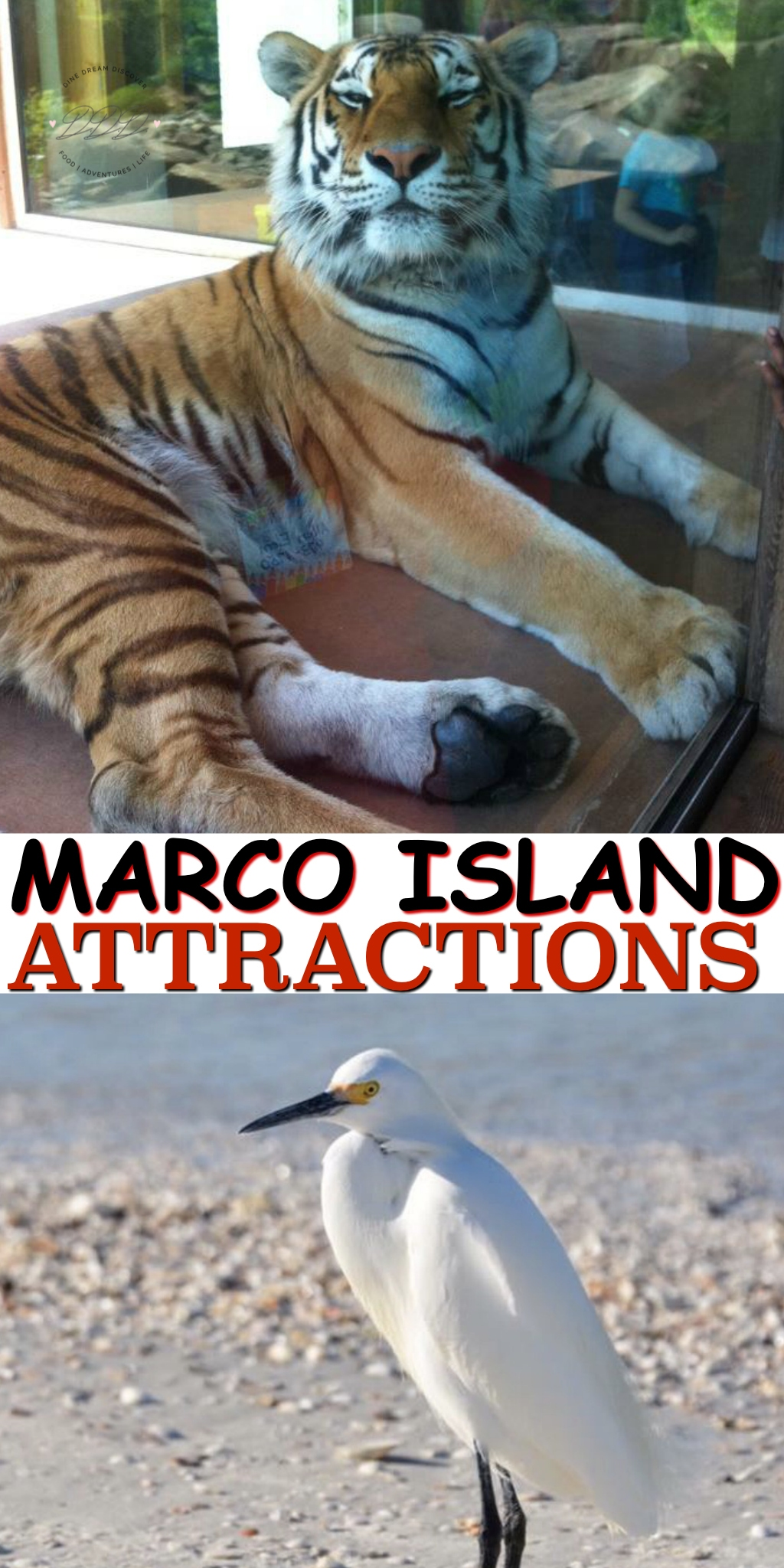 You've already decided that your next vacation will be on Marco Island. Now what do you need to see or do once you get there and where do you stay?