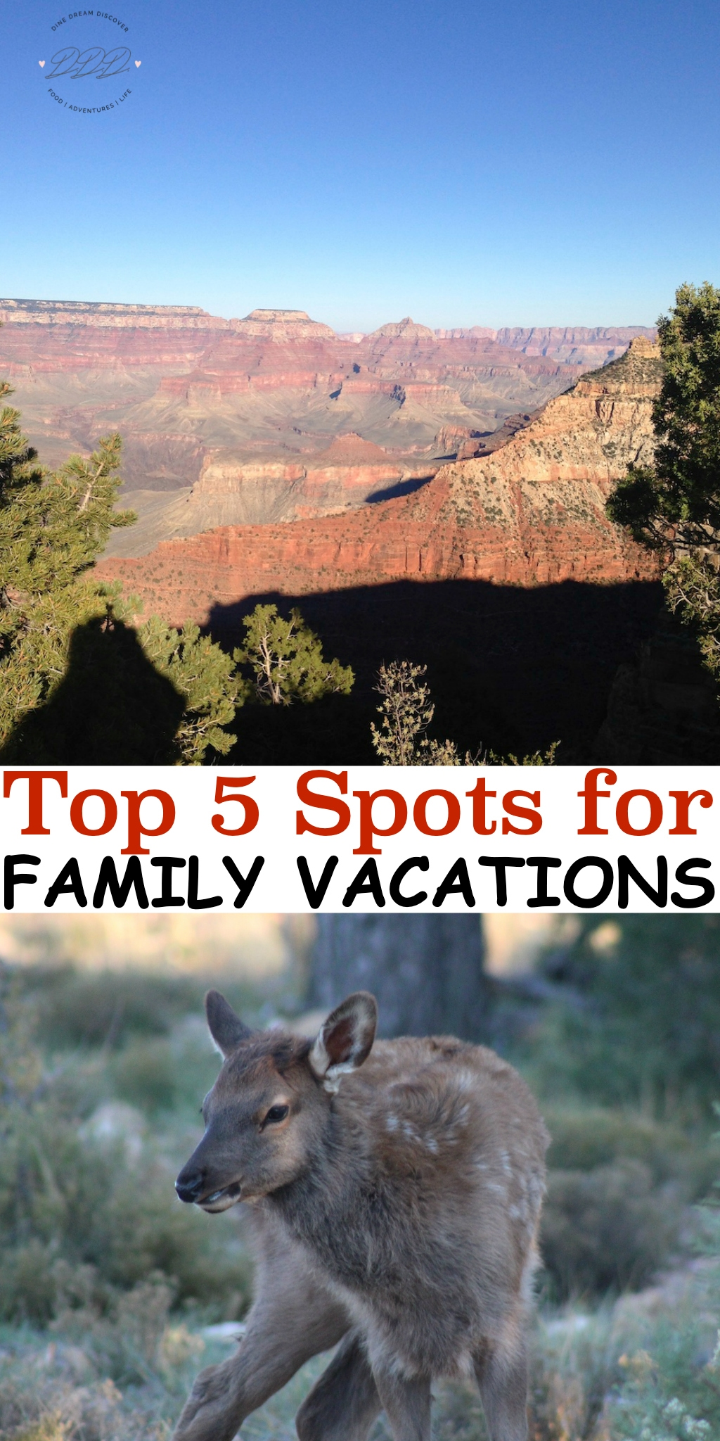 There are so many great places to take your kids on vacation that narrowing it down to five Family vacations is going to be difficult.