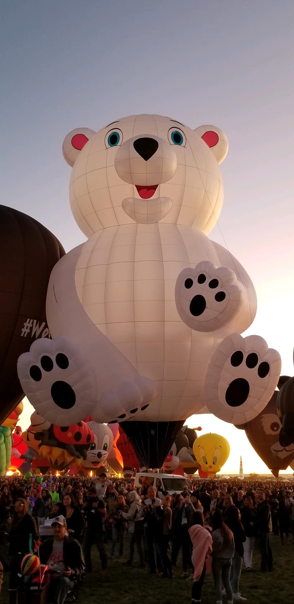 bear hot air balloon