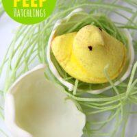Easter Peep Hatchlings