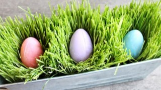 How to Grow Your Own Edible Easter Grass