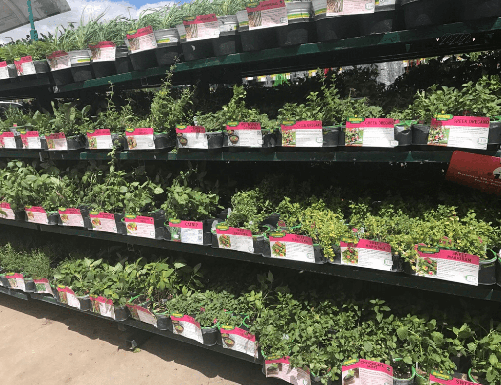 which herbs should I grow