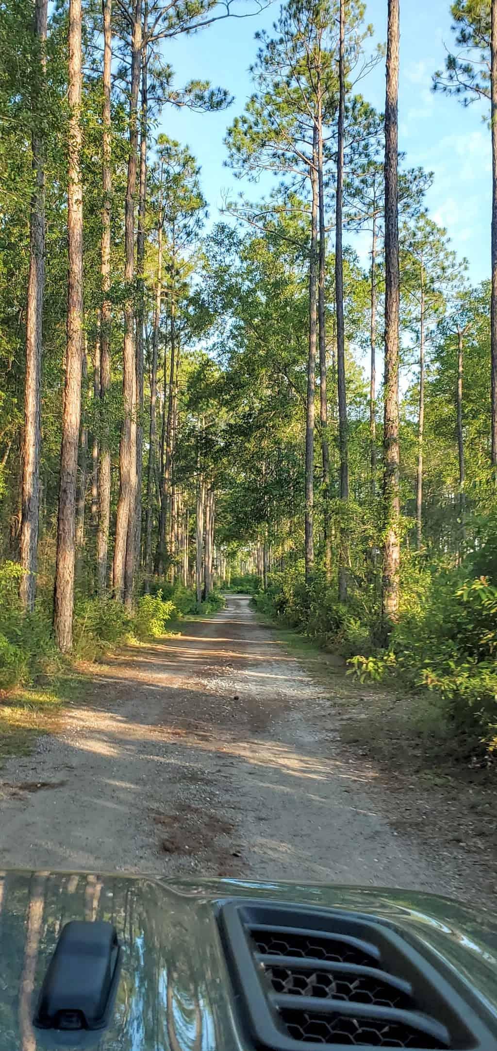 pine log state park