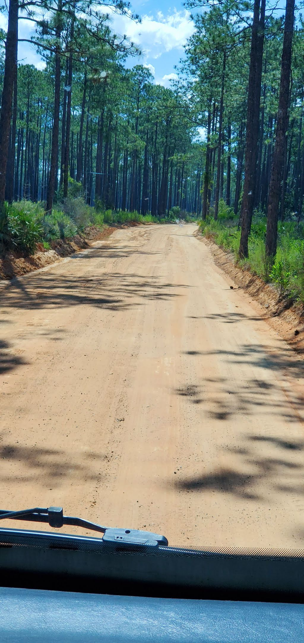 dirt road in pine log state forest