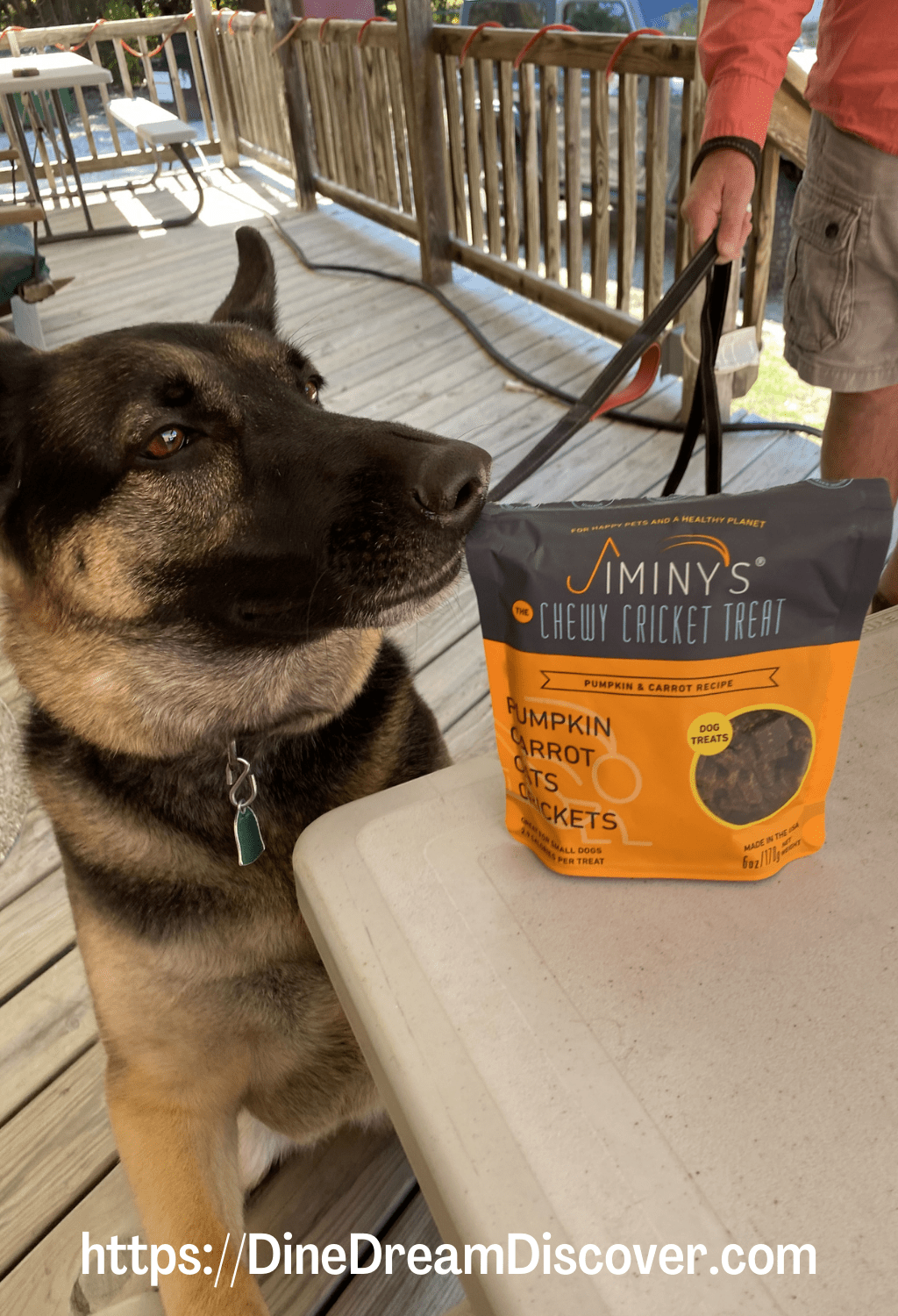 cricket protein for dogs
