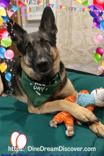 happy birthday harley