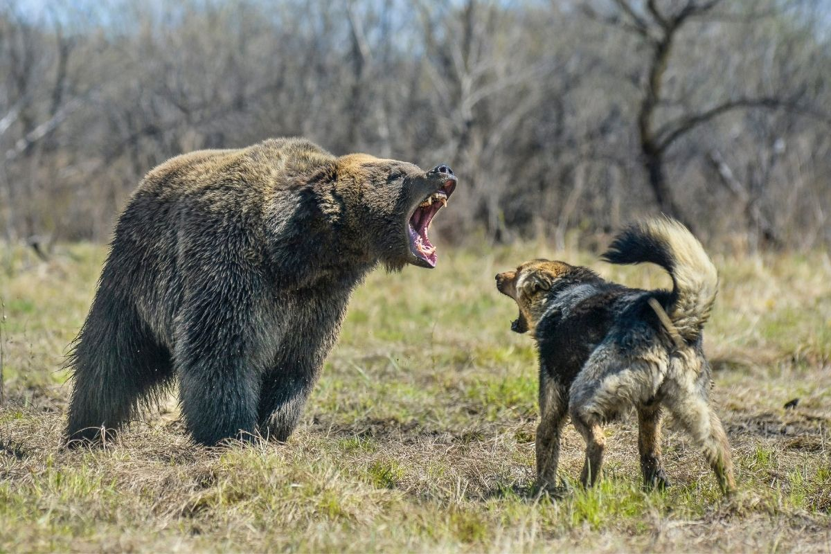 dog with bear